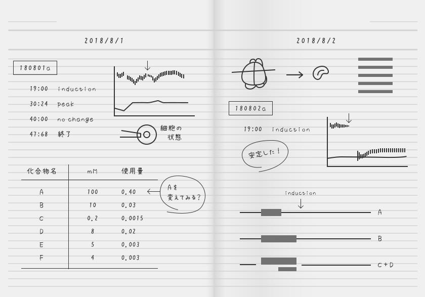 実験ノート(Bさん)