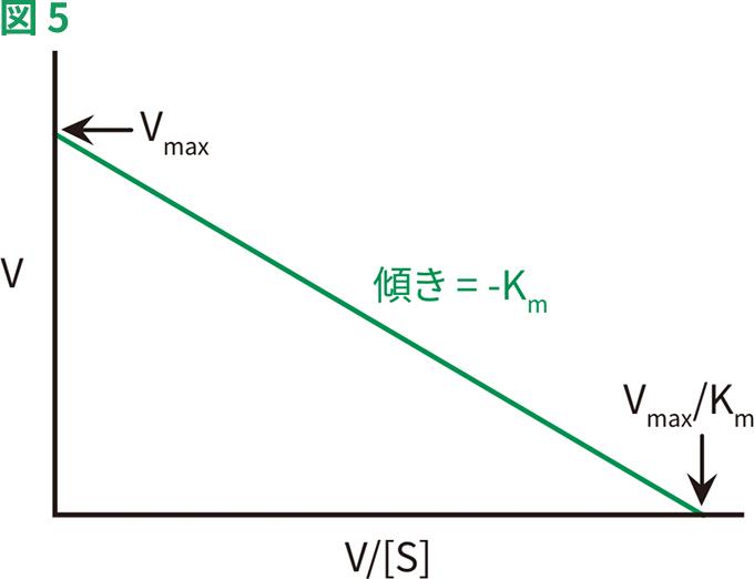 ミカエリス 定数